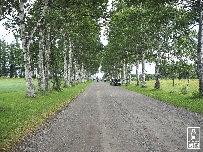 白樺並木街道