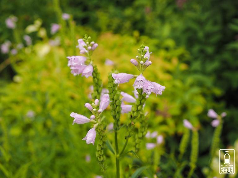 富良野-風之花園