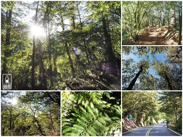 關原森林步道