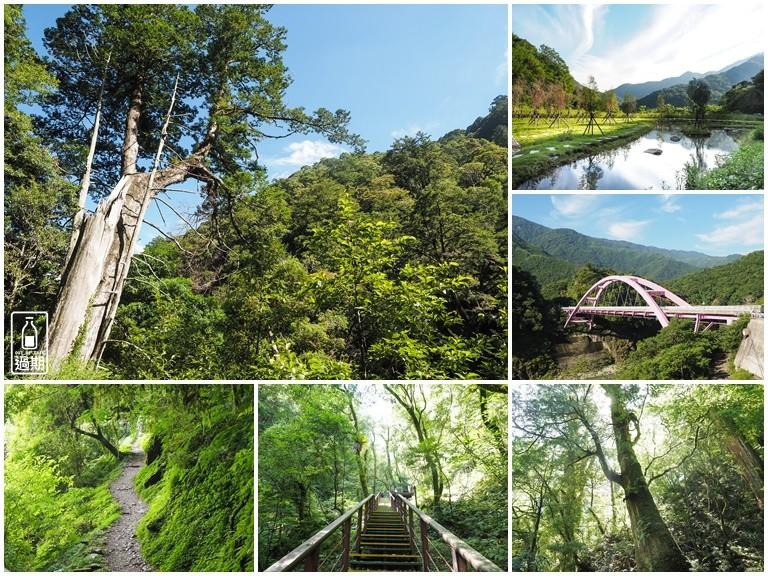 拉拉山神木群步道