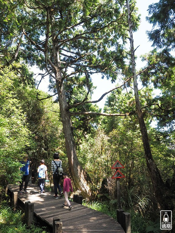 太平山莊紅葉道-鎮安宮-檜木原始林步道
