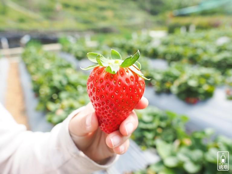 雲夢天草莓園
