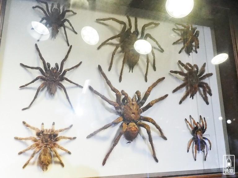 台灣昆蟲館-新竹館