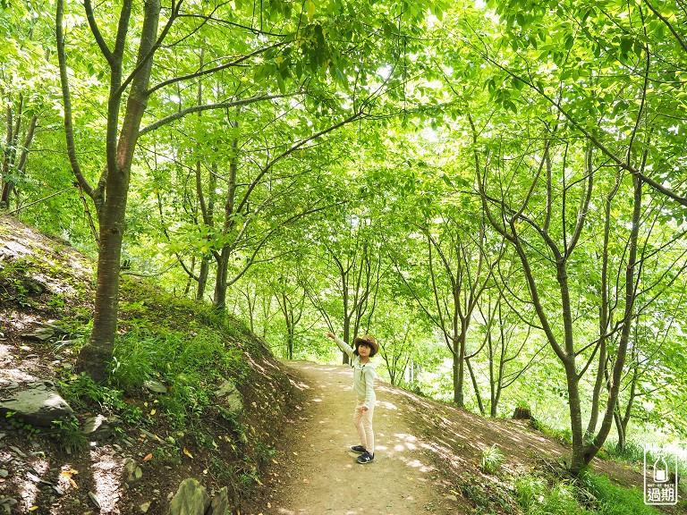 司馬庫斯神木群步道