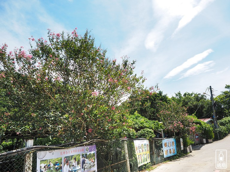 八卦景觀茶園