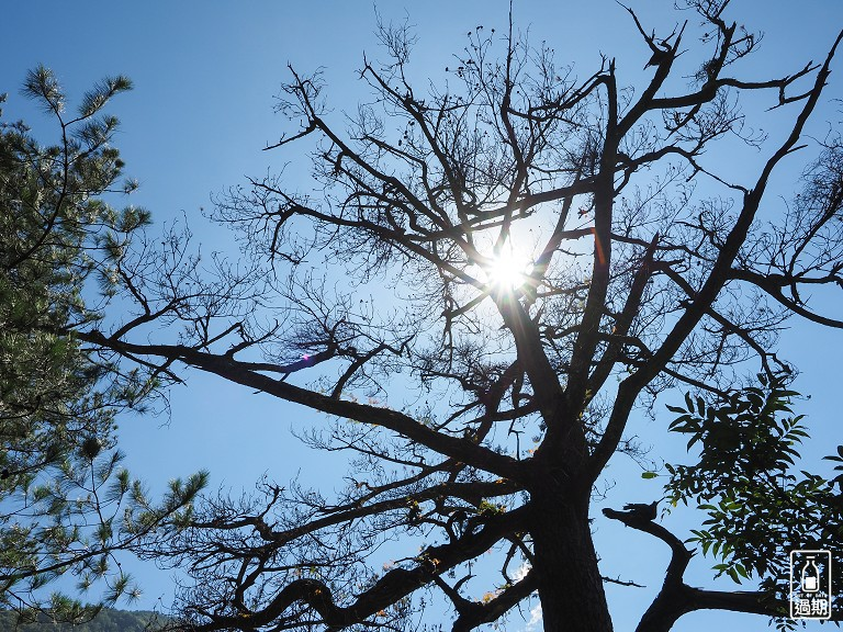 奧萬大國家森林遊樂區